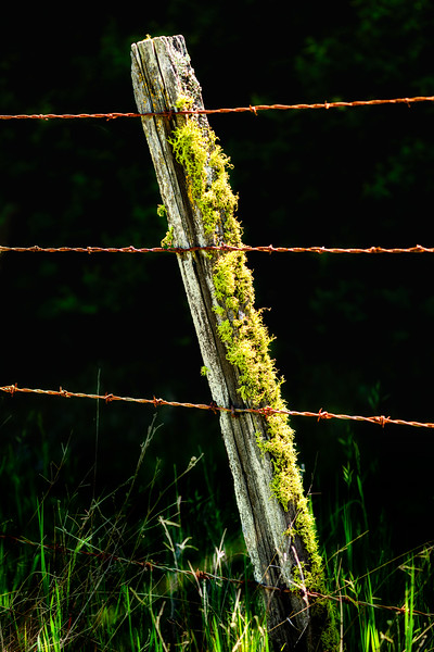 Fencepost, Henry Coe State Park, California, 2010