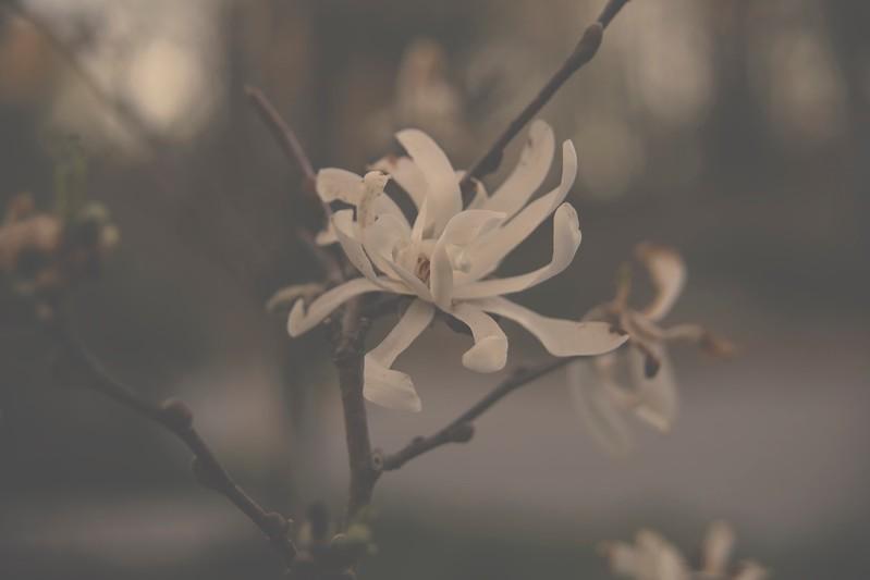 Farm Artdeson Magnolia Tree