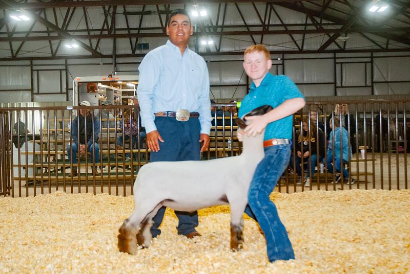 kay_county_showdown_sheep_20191207-119.jpg