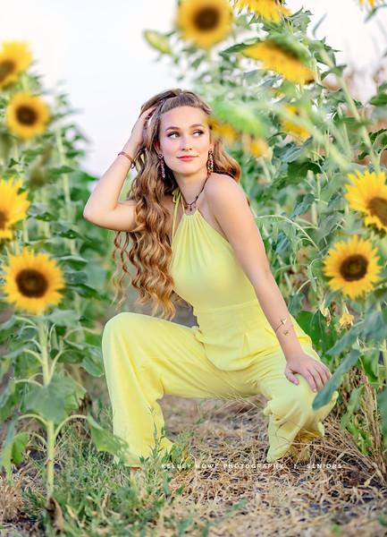 Sunflower 1114.jpg