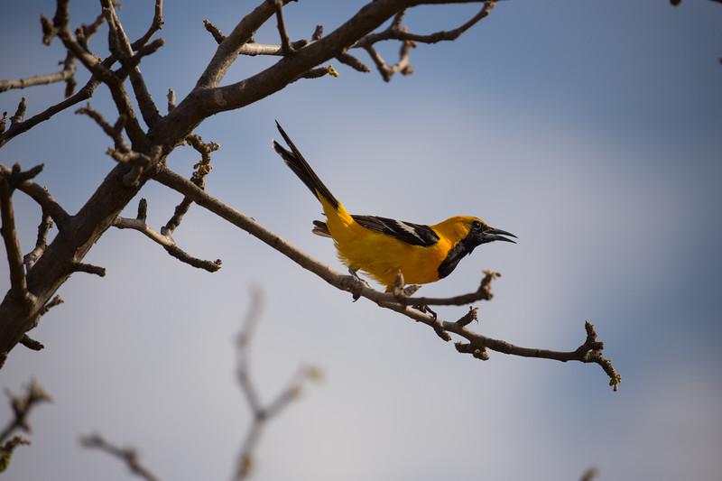 Baja Desert-3594.jpg