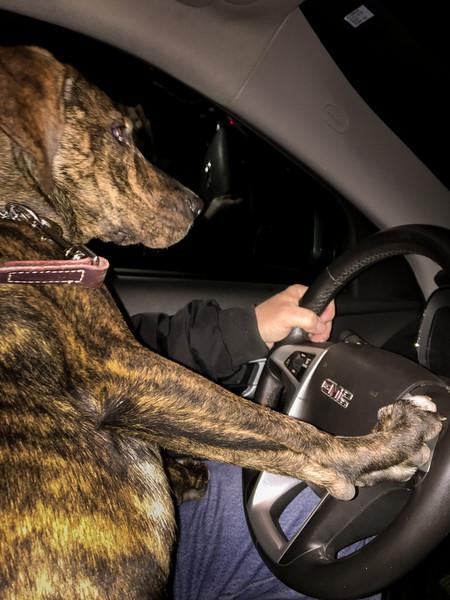 Abby Driving IMG_0038.jpg