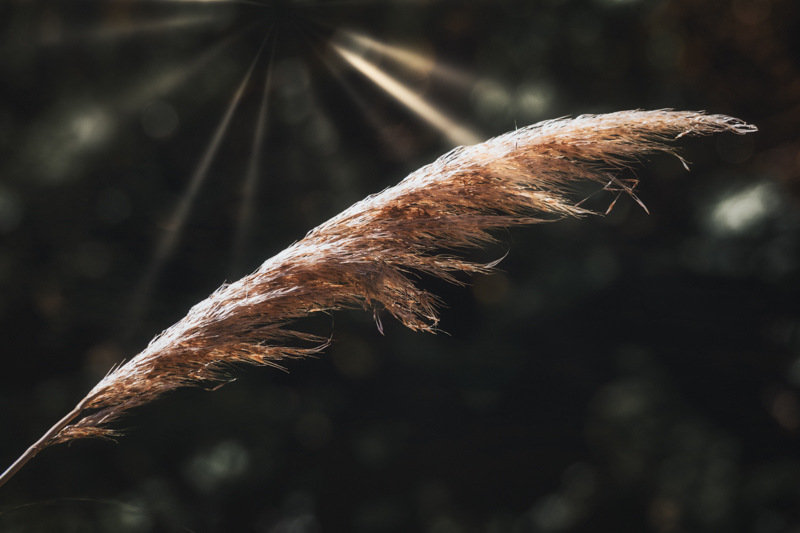 November 12 - Feathery leaf under the ray of the sun.jpg