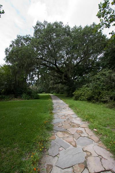 Live Oak and Path.jpg