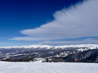 Bluebird at Winter Park