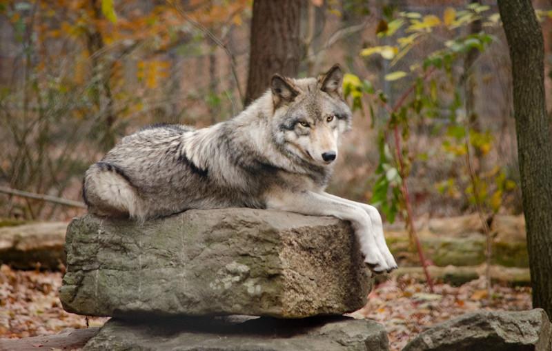 WEBSITE-Lakota Wolf Preserve-107-Edit-012.jpg