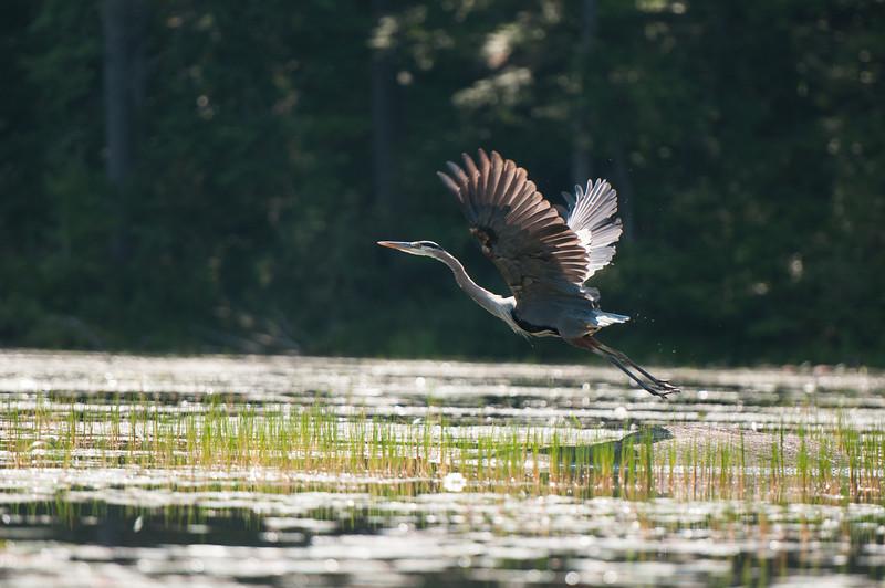 Ossipee Lake, Tuesday.