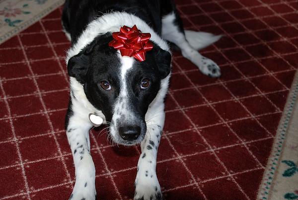 Christmas 2008 - Cedar  Eden & Gilmanton