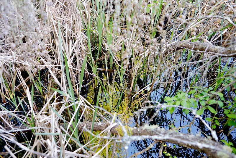 wetlands_11.JPG
