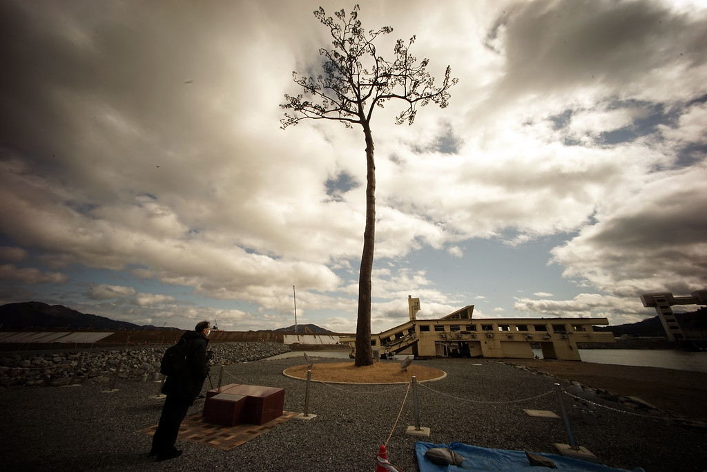 . In this Wednesday, March 4, 2015 photo, the lone pine tree that miraculously survived the deadly 2011 tsunami among 70,000 trees along the coastline, stands in Rikuzentakata, Iwate Prefecture, northeastern Japan. The tree, which was badly damaged from seawater after surviving the tsunami, was cut down in 2012 and treated for decay after which it was preserved using artificial materials. It was later placed back where it was found to stand as a symbol of hope and survival. (AP Photo/Eugene Hoshiko)