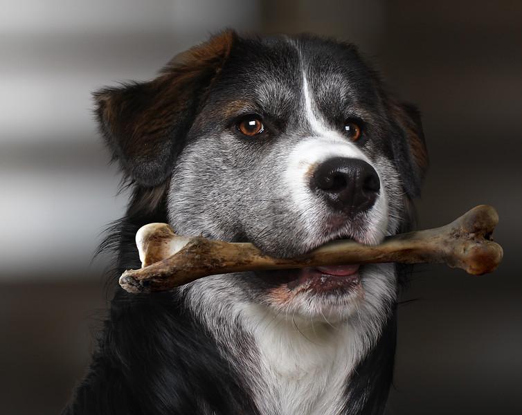 Dog-face1.jpg