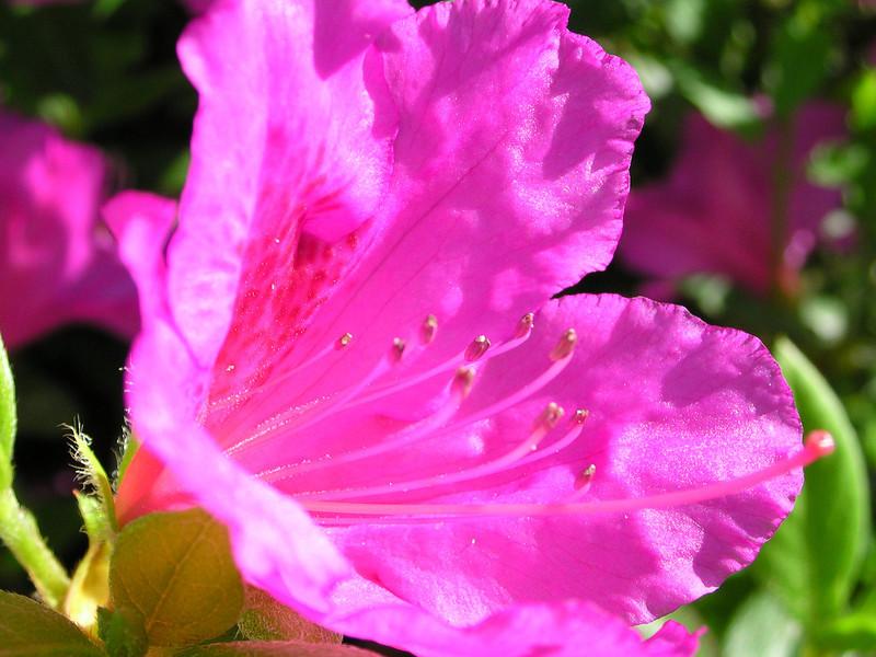 carolina flower 069.jpg