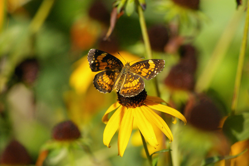 butterflyapalooza 212.jpg