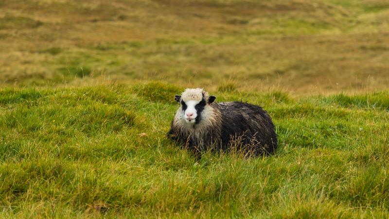Faroes_5D4-4298.jpg