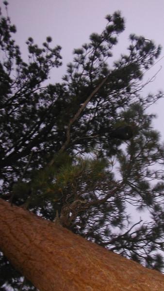sequoia 054.JPG