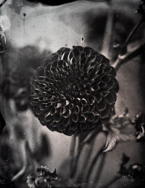 sunflowers (8 of 13).jpg