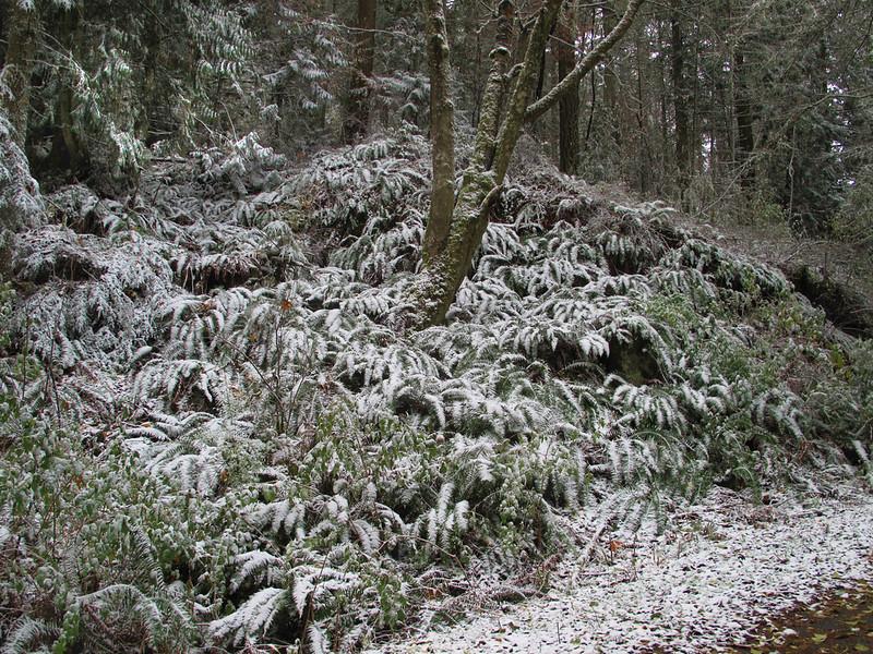 IMG_7878 Mt Erie winter Fall forest.jpg