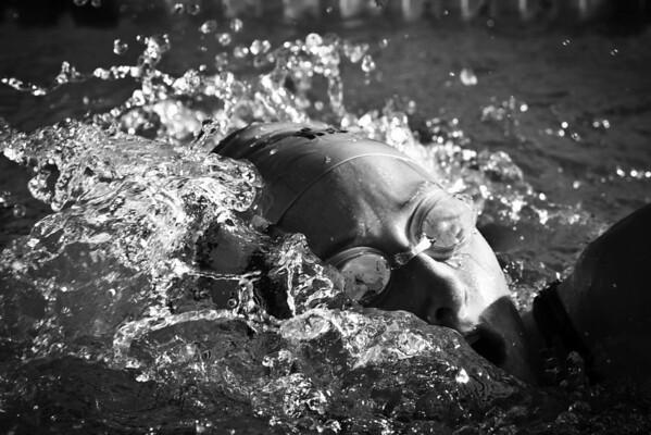 Killer Whales 2010