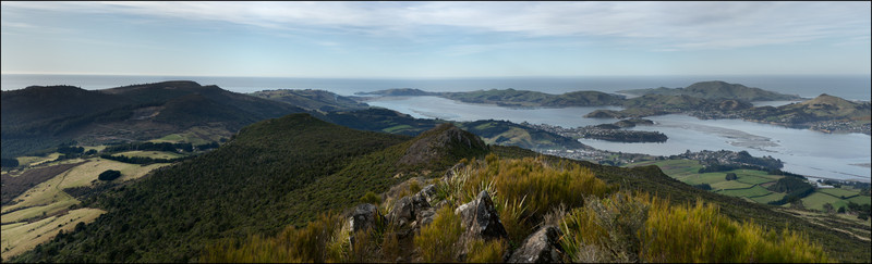 NZ2011