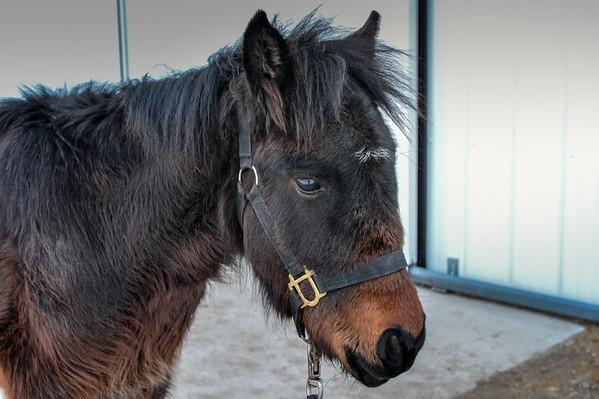 Wild Horses 2014