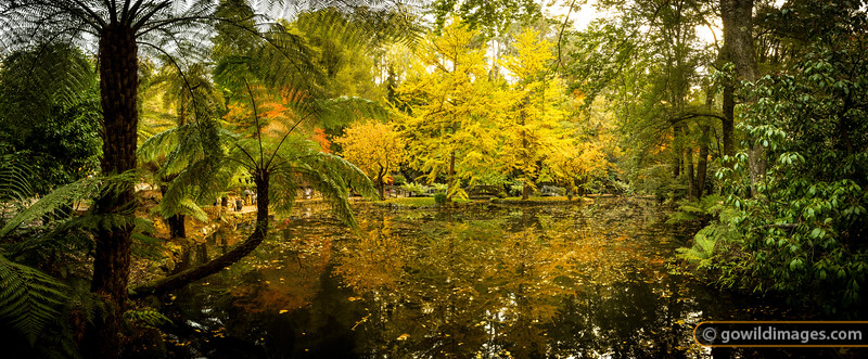 Ginkgo lake