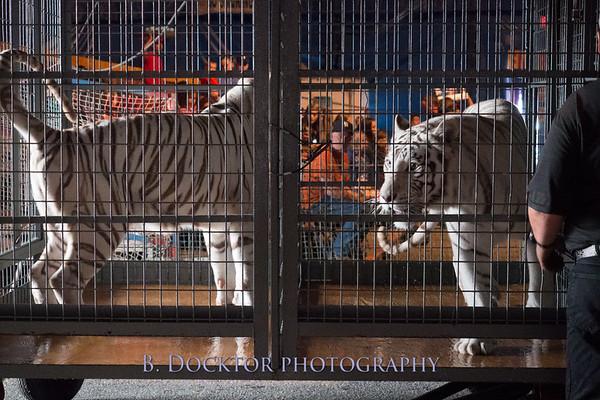 Circus in Kingston
