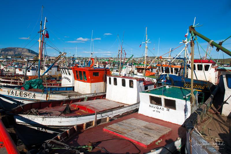 091210_punta_arenas_puerto_natales_3353.jpg