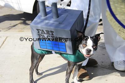 Haute Dog Howl'Oween Parade 10/27/13