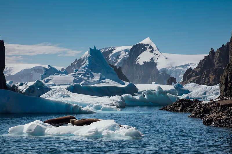 _MG_8308_20170123_Antarctica.jpg