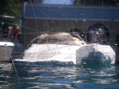 SF Aquarium  2007