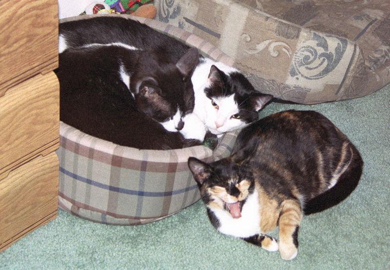 2003 12 - Cats 66.jpg