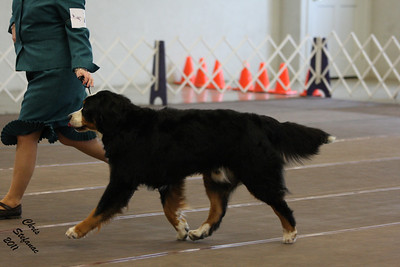 Veterans 9-11yrs Dog PVBMDC Sunday 2/20/2011