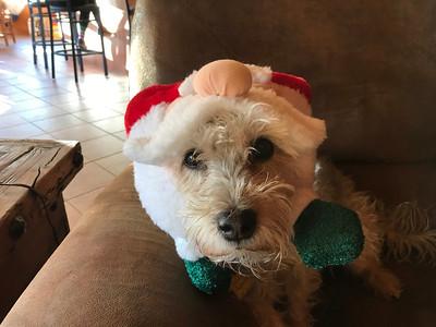 Christmas '18 Scottsdale
