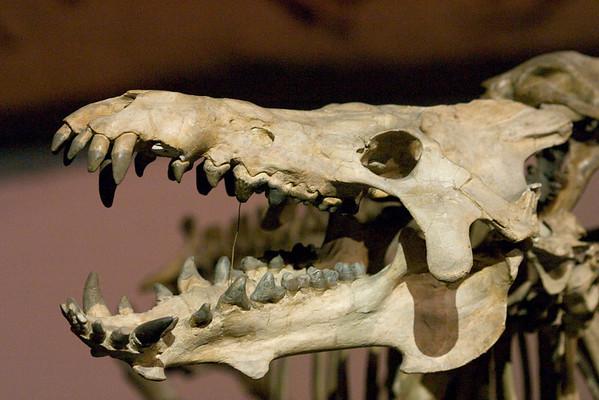 2004.02.21 - LA Natural History Museum