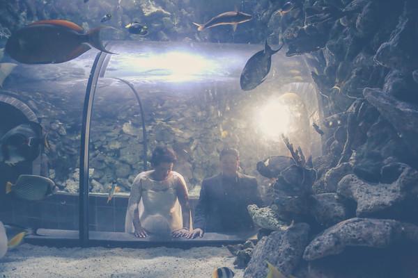 WEDDING: Kat & April:  Dallas World Aquarium - 3/7/16 TEASERS