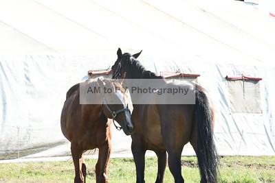 Strathmore Chuck Wagon Races