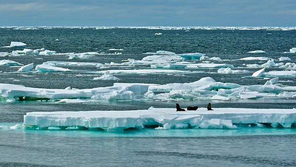 Antarctica 2015