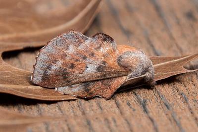 July 28, 2013 - Bayfield Moths