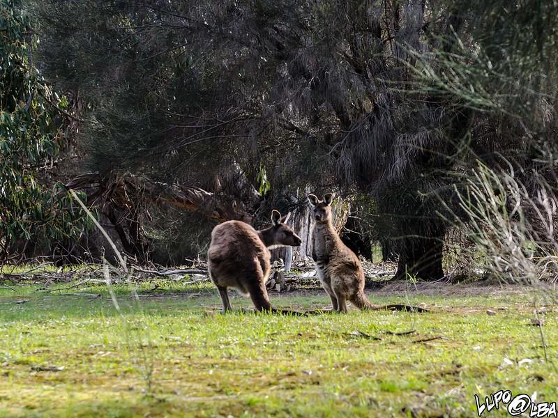 Australia-425.jpg