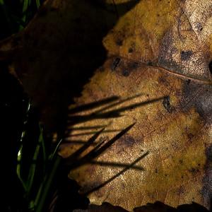 Les ombres de l'automne