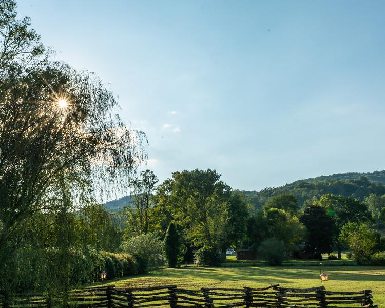 The sun peeks through a weeping willow in Deep Creek, September 20, 2018. (Joseph Forzano / Deep Creek Films)