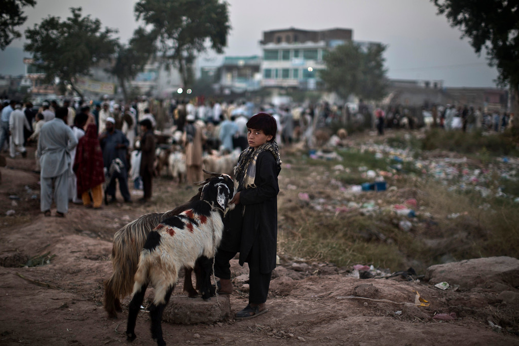 """. A Pakistani boy stands next to his two goats that he\'s hoping to sell at a livestock market, for the Muslim holiday of Eid al-Adha, or \""""Feast of Sacrifice,\"""" which starts tomorrow in Islamabad, Pakistan, Tuesday, Oct. 15, 2013. (AP Photo/Muhammed Muheisen)"""