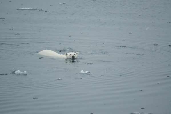 2013.07  Svalbard - Realm of the Polar Bear