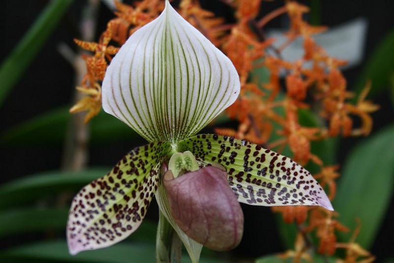 orchids 09 143.jpg