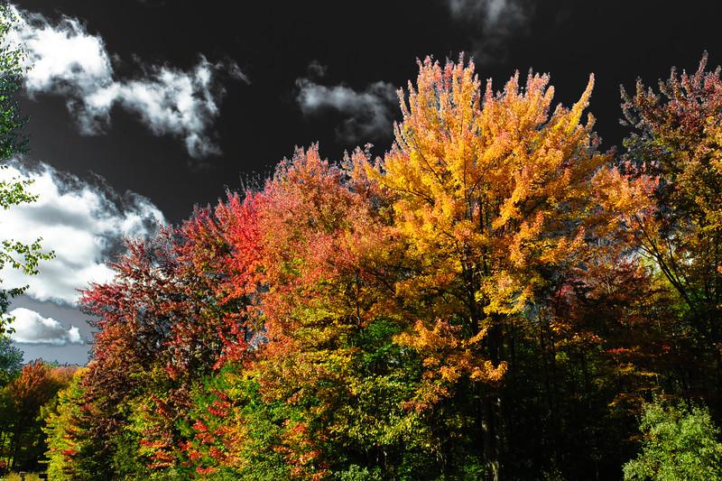 20141009 Autumn-3139.jpg