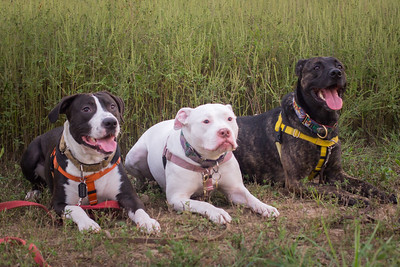 Cassandra and pups