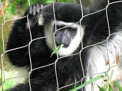 Wildlife - Primates