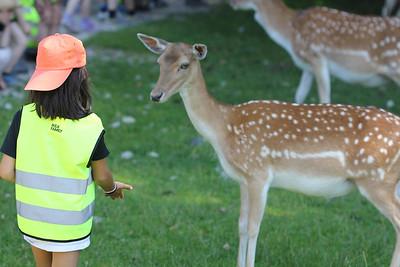 July 2013 Tierpark