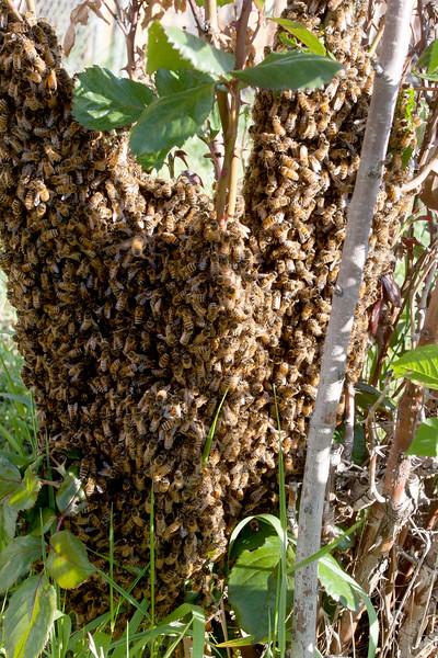 swarm_052214_067.jpg