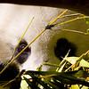 San Diego Zoo12001